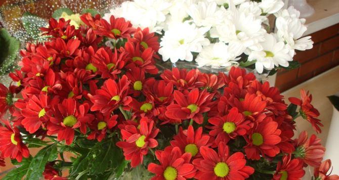 Какие цветы модно дарить женщинам