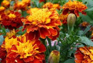 Цветы в народной и научной медицине
