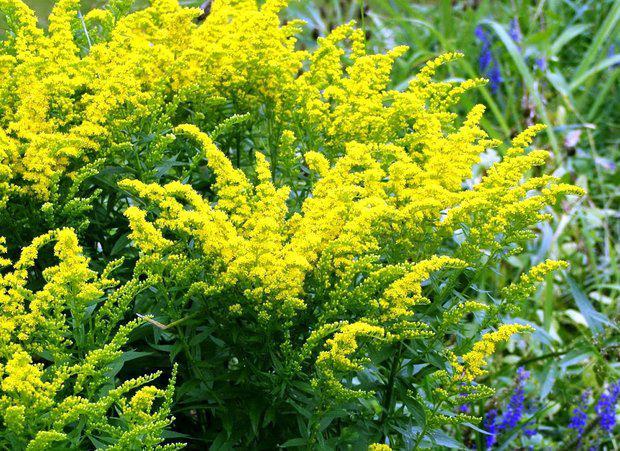 Букеты цветов способные вызвать аллергию