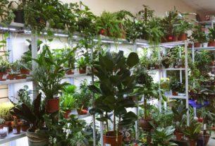 Правильный выбор комнатных растений